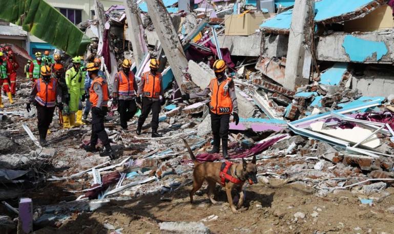Tim Penyelamat dengan menggunakan anjing pelacak mencari para korban yang tertimpa reruntuhan akibat gempa bumi di Sulawesi Barat beberapa waktu lalu. (Dok : Istimewa)