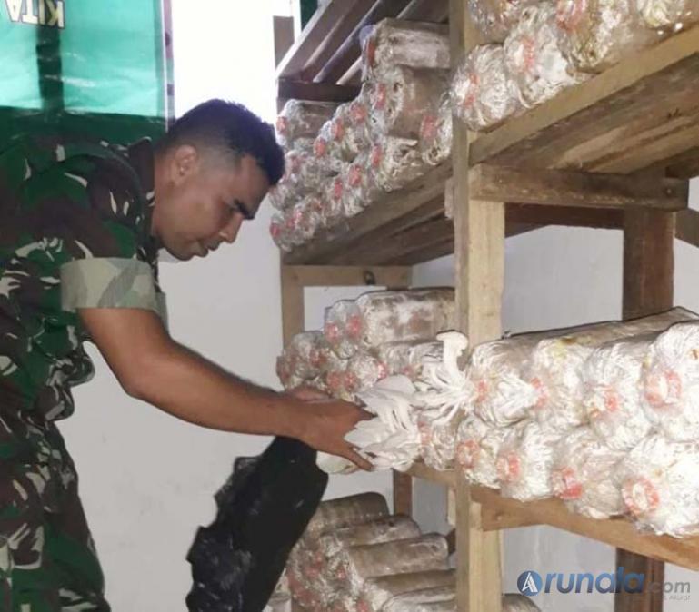 Danramil 05/Pauh Kuranji Padang, Kapten Inf Irsyad memperlihatkan jamur tiram hasil budidaya Koramil tersebut, Rabu (26/2). (Foto : dyz)