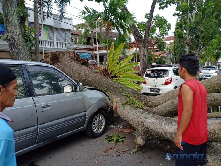 Dua unit mobil ringsek ditimpa pohon tumbang, Rabu pagi (4/3). (Foto : dyz)