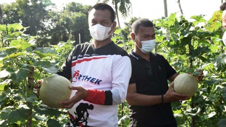 Wali Kota Genius Umar saat panen buah Melon milik Kelompok Wanita Tani (KWT) Desa Padang Birik-Birik, Pariaman Utara, Jumat (9/7). (Dok : Istimewa)