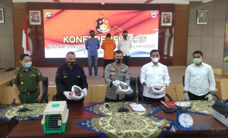 Polda Sumbar saat jumpa pers terkait kasus perdagangan satwa dilindungi, di Mapolda Sumbar, Senin (25/1). (Foto : Derizon)