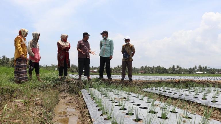 Wako Genius Umar bersama Kepala (DP3) Pariaman, Darlis saat meninjau lahan tanaman bawang merah petani di Sungai Rotan, Kamis (15/4). (Dok : Istimewa)