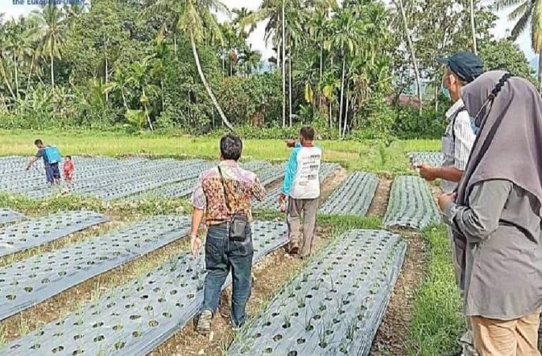 Para petani muda sedang mengaplikasikan program echo green di daerah mereka di Ulakan Tapakih, Kabupaten Padangpariaman, Selasa (14/9) kemarin. (Dok : Istimewa)