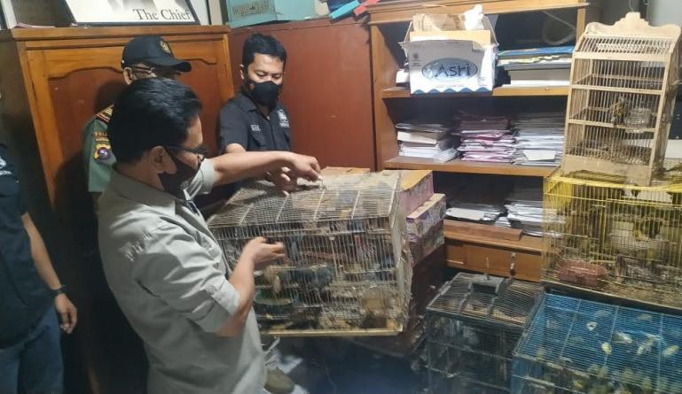 Personel Reskrim Polres Bukittinggi bersama pihak BKSDA setempat satwa dilindungi hasil tangkap dari seorang pria F, Selasa malam (5/10) lalu. (Dok : Istimewa)