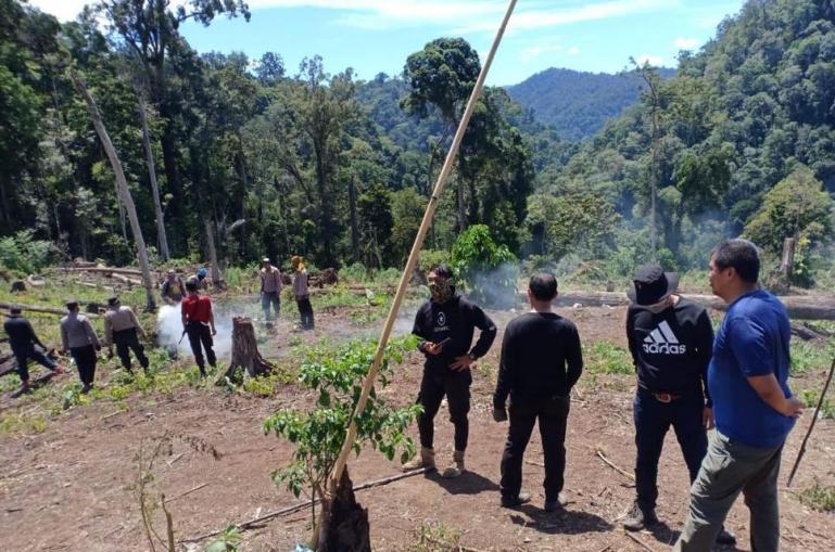 Tim Direktorat Tindak Pidana Narkoba Bareskrim Polri musnahkan tujuh hektare ladang ganja di area Gunung Lauser, , Aceh, beberapa hari lalu. (Dok : Istimewa)