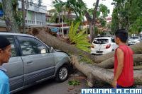 Dua mobil Ringsek Ditimpa Pohon Tumbang