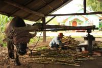 Mangilang Tabu, Tradisi Lama yang Masih Ada di Lawang