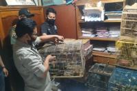 Polres Bukittinggi Tangkap Pemilik 583 Ekor Satwa Dilindungi